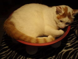Marcus climbs in to catbowl bed with ease