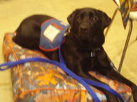 Assistance dog on Smucci fall leaf