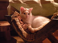 Cat Marcus In Seasonal Smucci Manger Bed